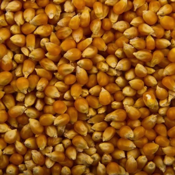 Jon kukorica fogyás Ezek is érdekelhetnek