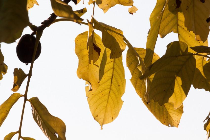 leaf-1731944_1920