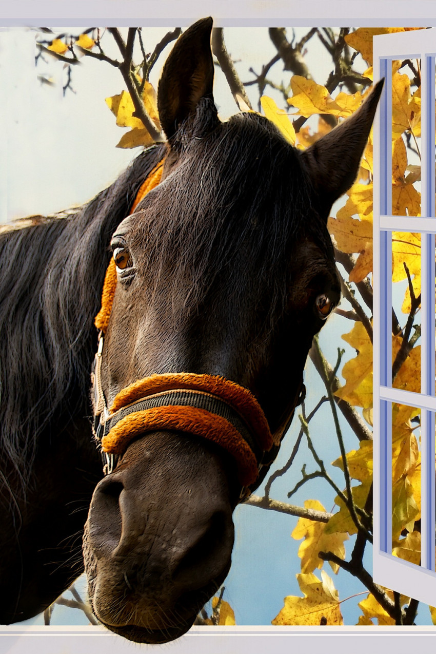 Ló az ablakban