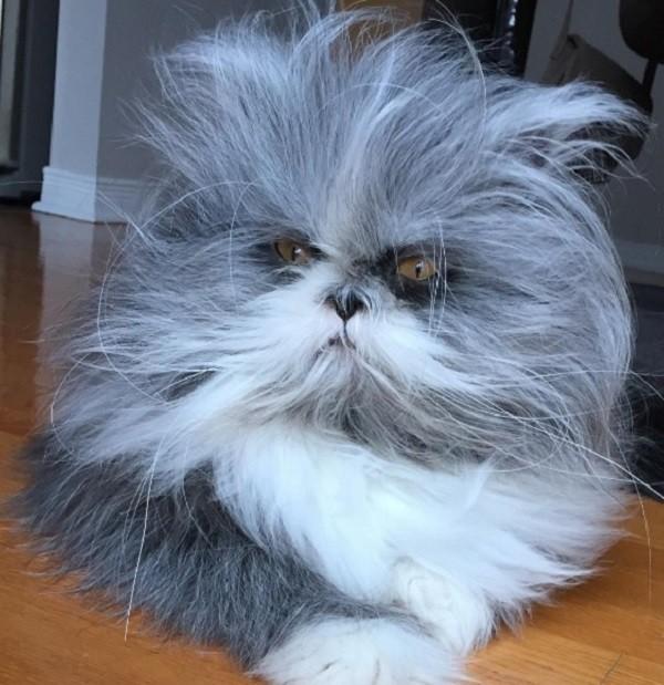 macska cica állat