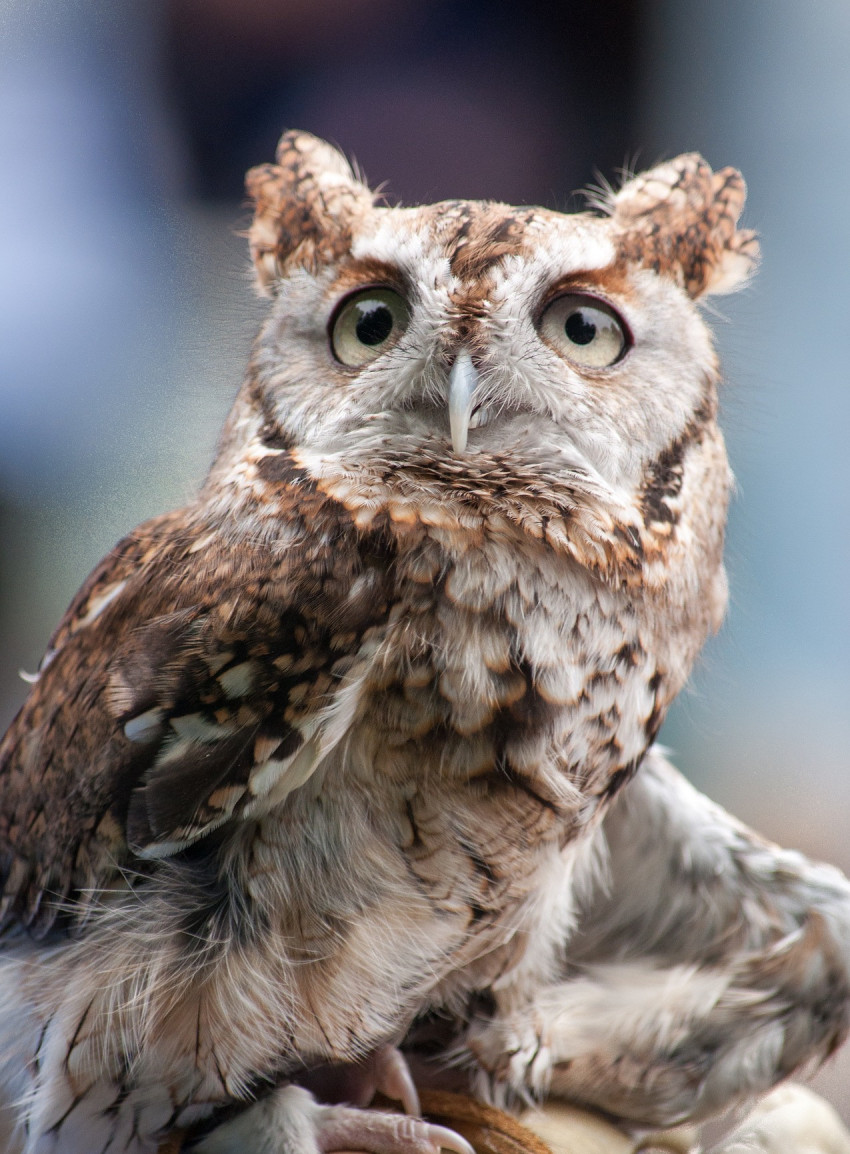 owl-1632707_1920