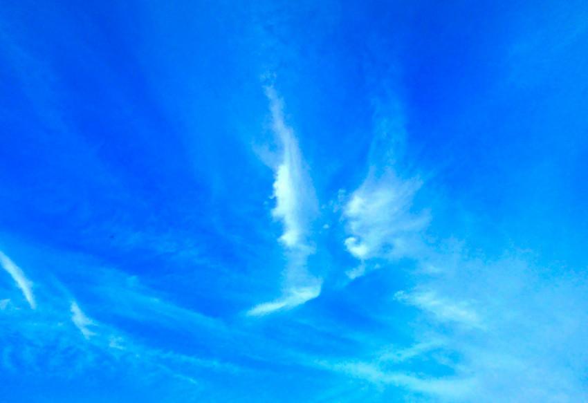szárnyas angyalok