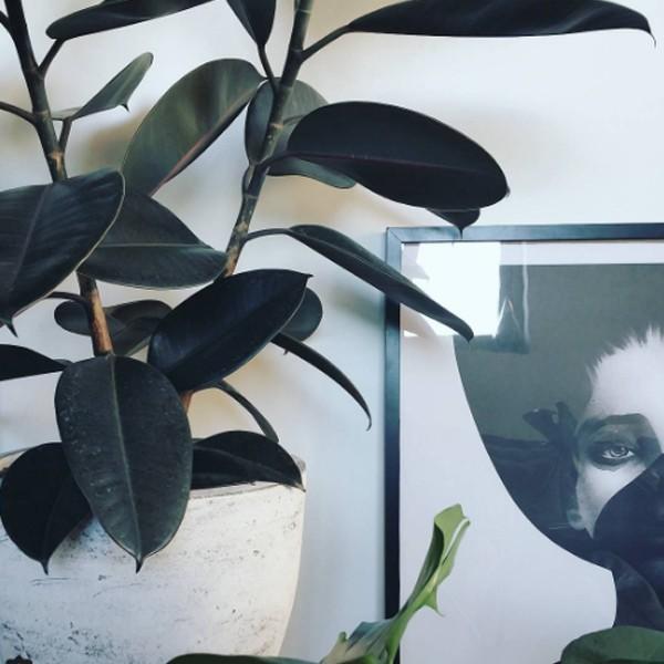 Varázsoljatok titokzatos dzsungelt az otthonotokból! – Szobanövény-kisokos kezdőknek és haladóknak